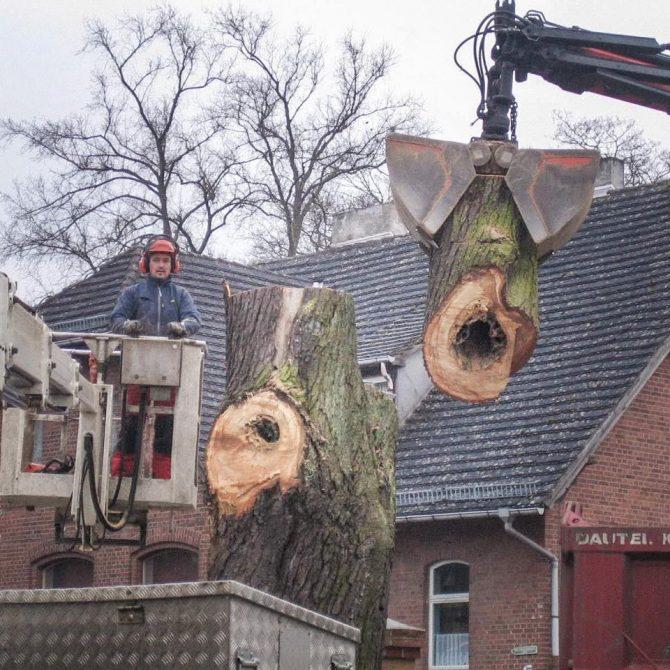 Abfuhr und Entsorgung » Baumservice Schwielowsee