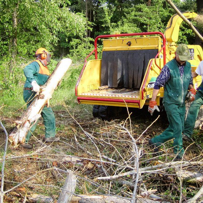 Baufeldberäumung » Baumservice Schwielowsee