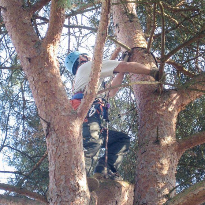 Baumkontrolle und Baumgutachten » Baumservice Schwielowsee