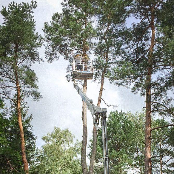 Baumschnitt » Baumservice Schwielowsee