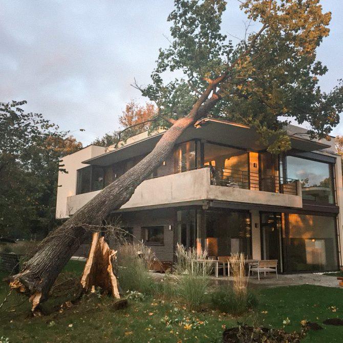 Sturmschadenbeseitigung » Baumservice Schwielowsee
