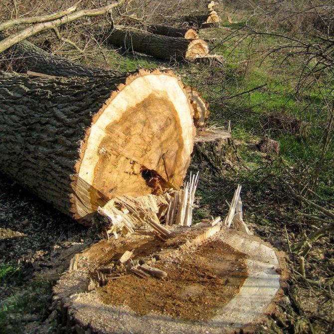 Baumfällung » Baumservice Schwielowsee